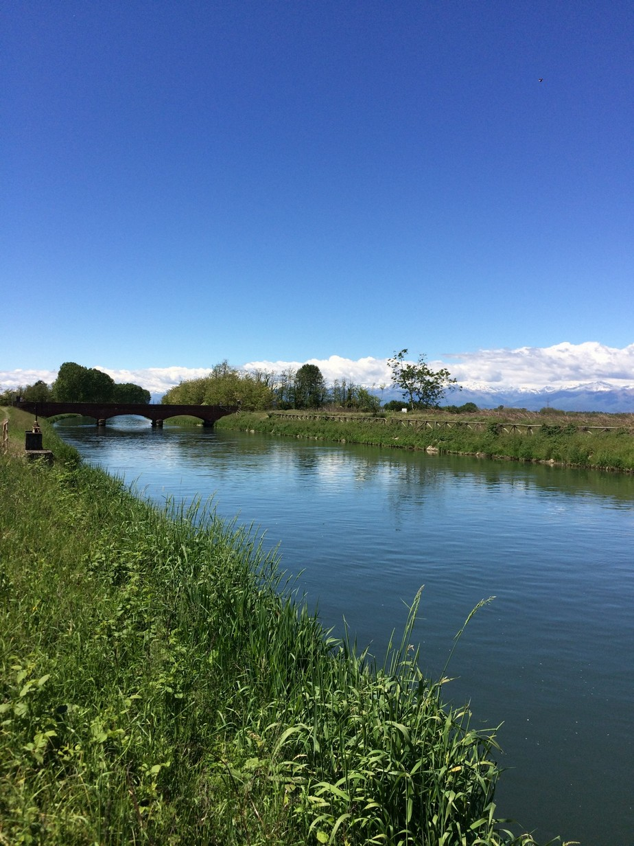 Il ciclo di vita del riso il re del riso for Irrigazione per sommersione